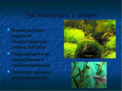 Растительность в океане Водные растения – водоросли. Распространены до глубин...