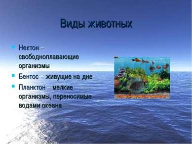 Виды животных Нектон – свободноплавающие организмы Бентос – живущие на дне Пл...