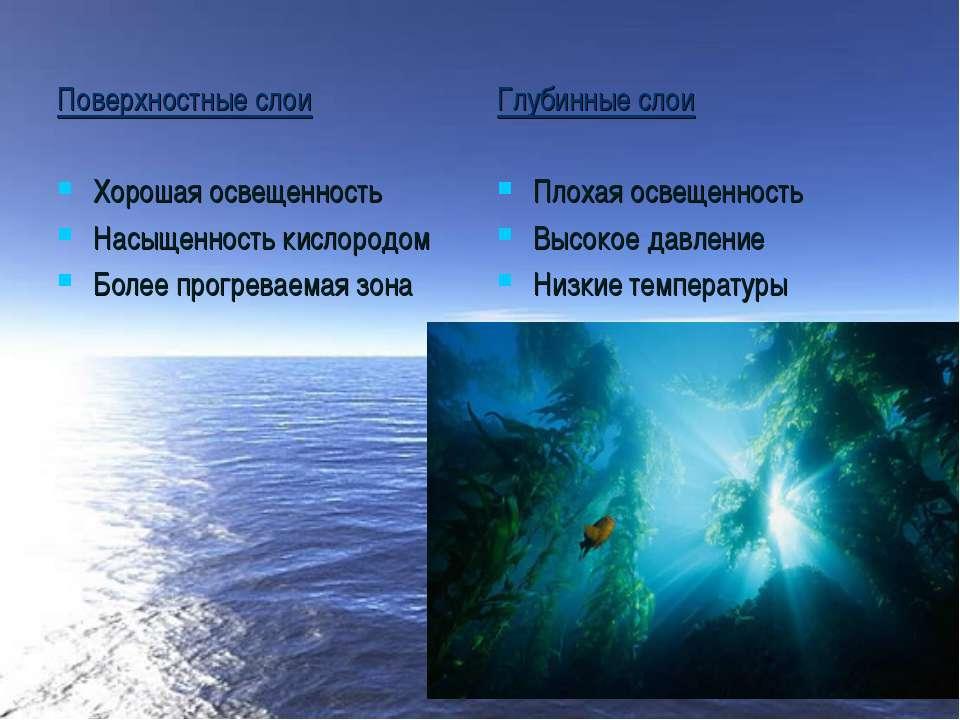 Поверхностные слои Хорошая освещенность Насыщенность кислородом Более прогрев...