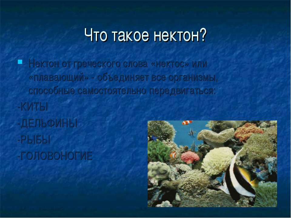 Что такое нектон? Нектон от греческого слова «нектос» или «плавающий» - объед...