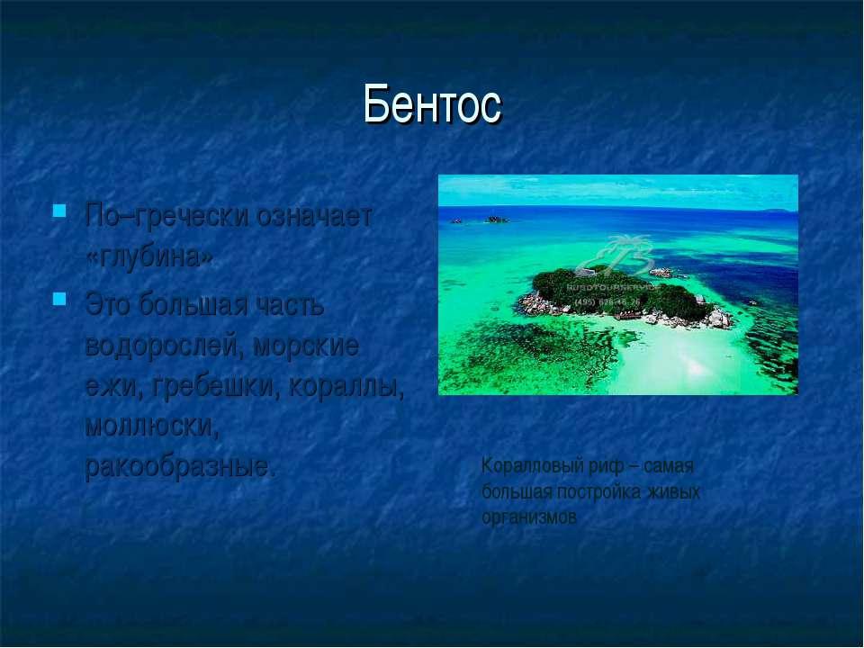 Бентос По–гречески означает «глубина» Это большая часть водорослей, морские е...