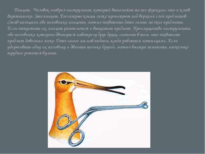 Пинцет. Человек изобрел инструмент, который выполняет те же функции, что и к...