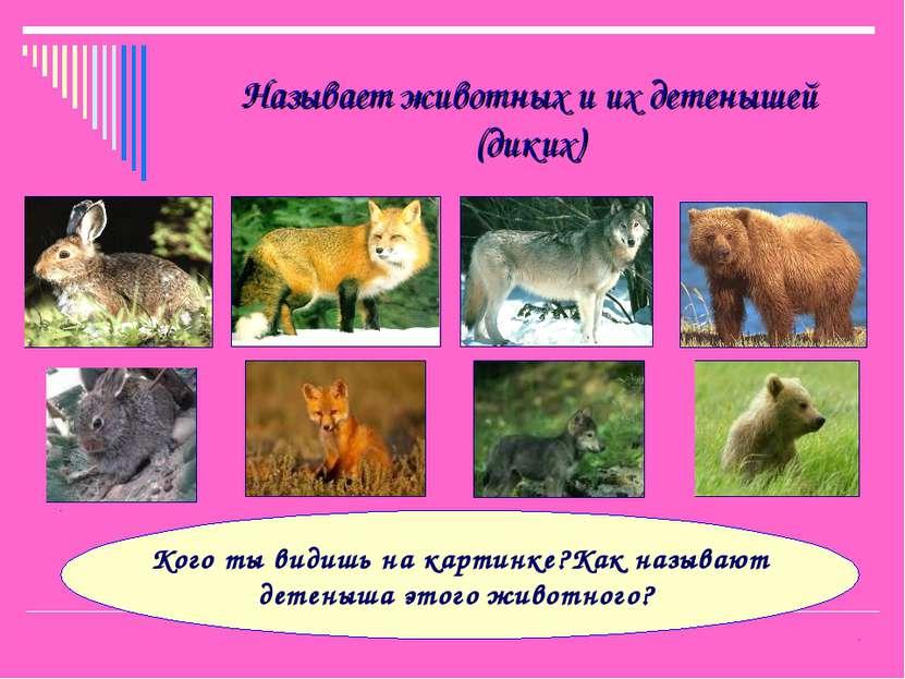 Называет животных и их детенышей (диких) Кого ты видишь на картинке?Как назыв...