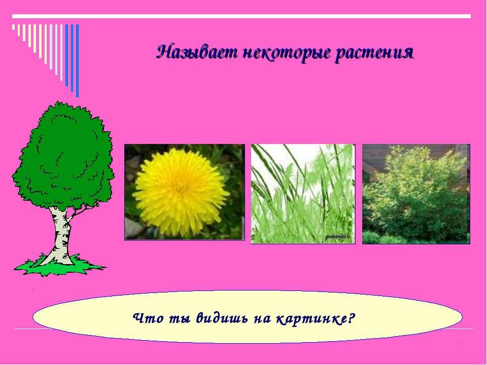 Называет некоторые растения Что ты видишь на картинке?