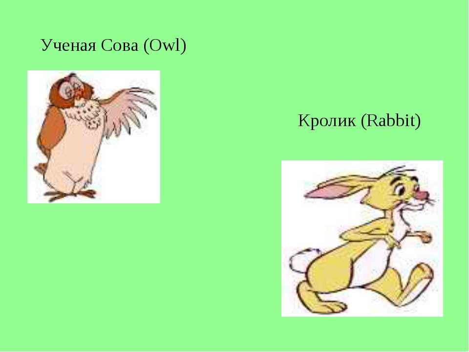 Ученая Сова (Owl) Кролик (Rabbit)