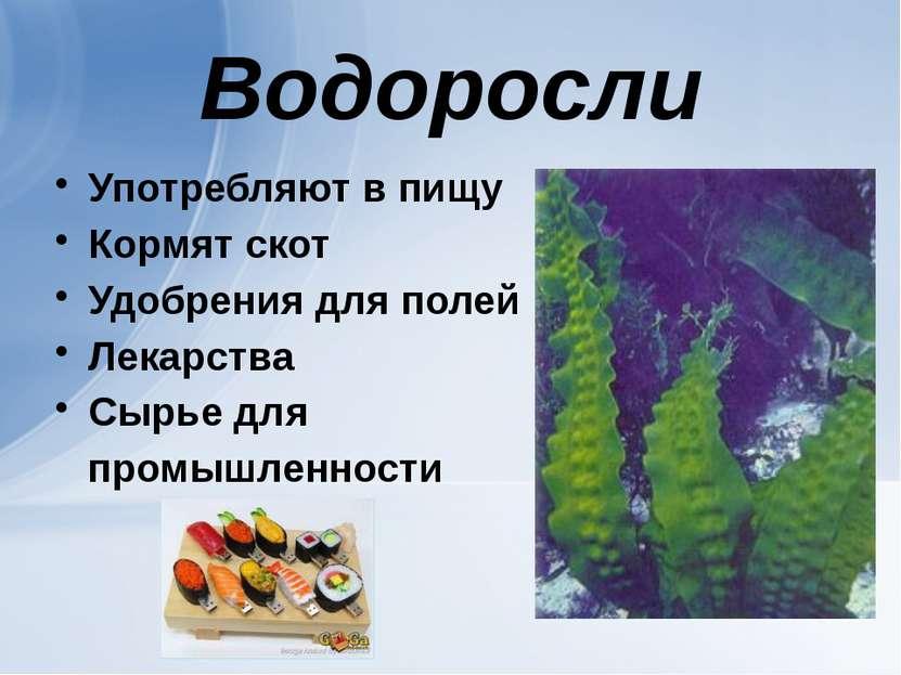 Водоросли Употребляют в пищу Кормят скот Удобрения для полей Лекарства Сырье ...
