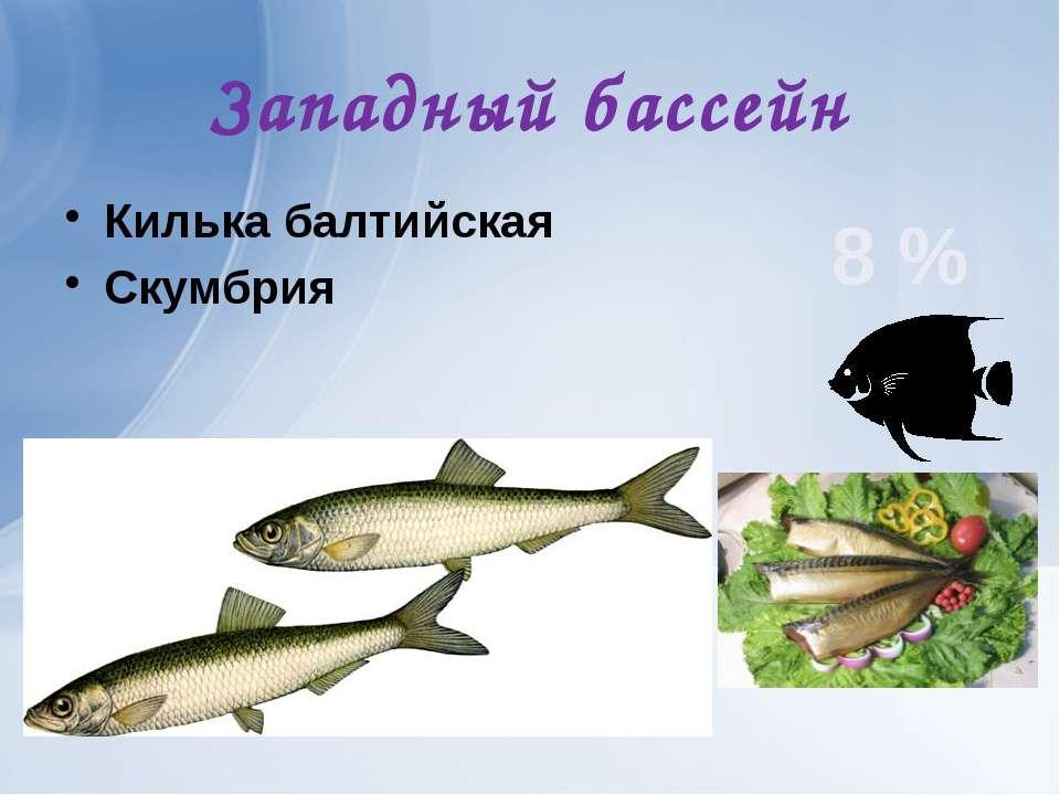 Западный бассейн Килька балтийская Скумбрия 8 %