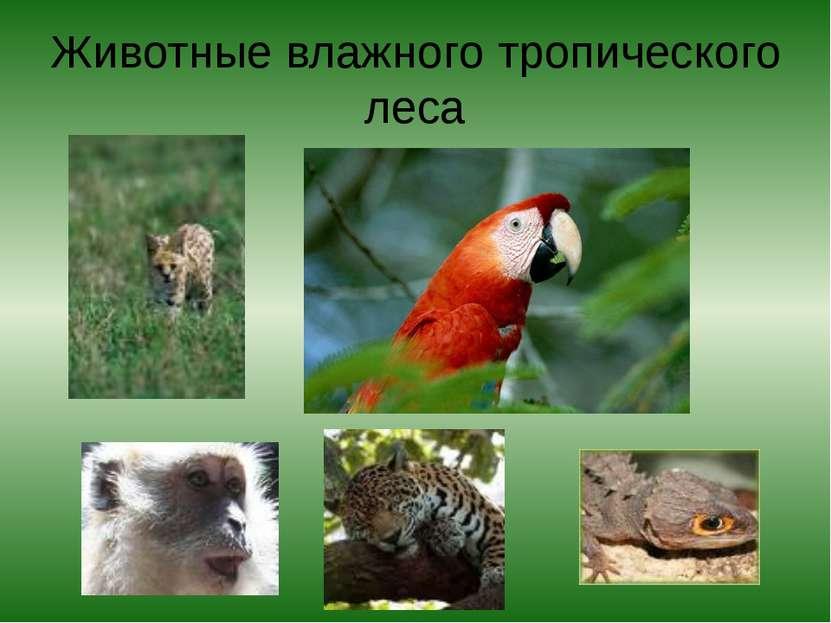 Животные влажного тропического леса