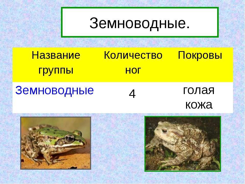 4 голая кожа Земноводные. Название группы Количество ног Покровы Земноводные