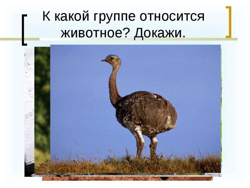 К какой группе относится животное? Докажи.