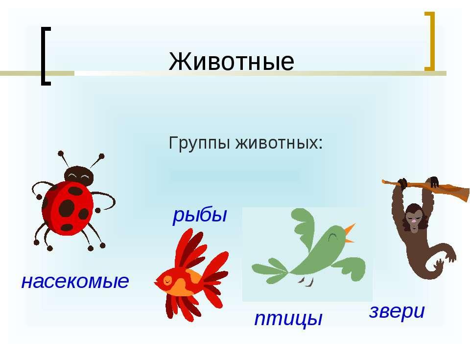 Группы животных: Животные насекомые рыбы птицы звери