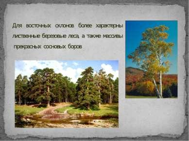 Для восточных склонов более характерны лиственные березовые леса, а также мас...