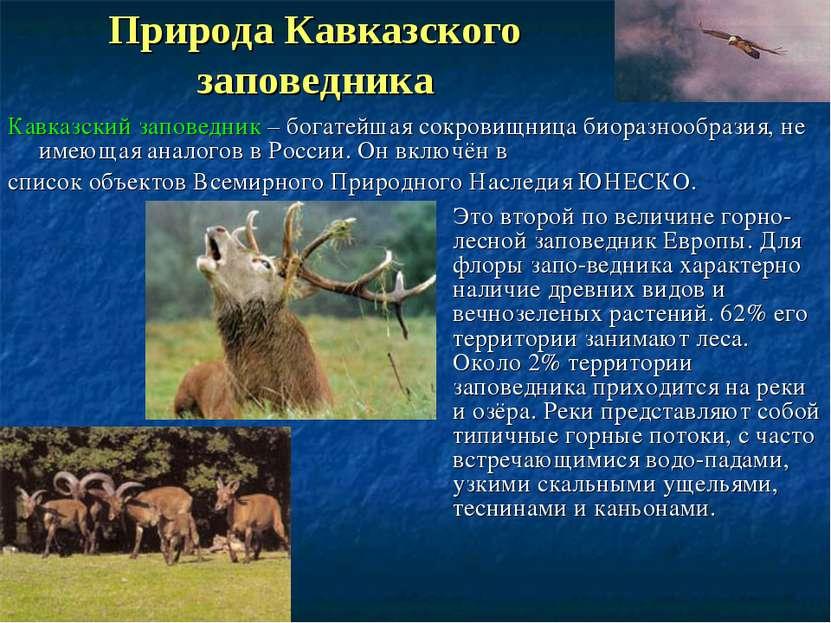 Природа Кавказского заповедника Это второй по величине горно-лесной заповедни...