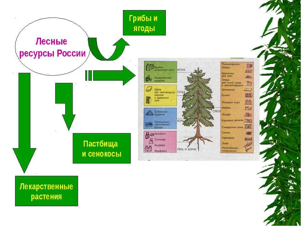 п и Лесные ресурсы России Пастбища и сенокосы Лекарственные растения Грибы и ...