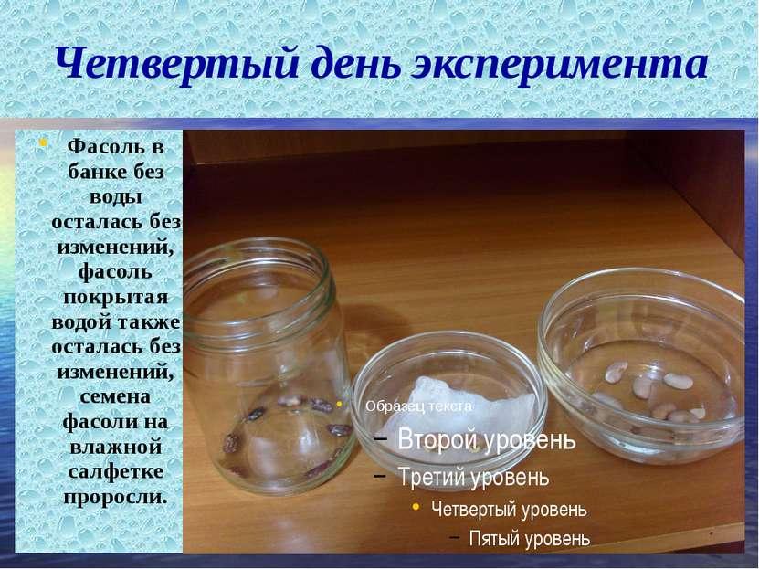 Четвертый день эксперимента Фасоль в банке без воды осталась без изменений, ф...