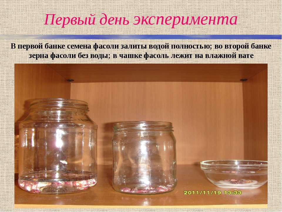 Первый день эксперимента В первой банке семена фасоли залиты водой полностью;...