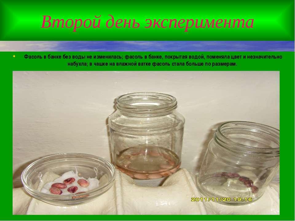 Второй день эксперимента Фасоль в банке без воды не изменилась; фасоль в банк...