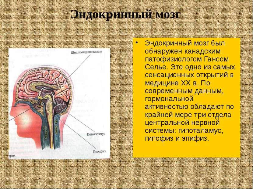 Эндокринный мозг был обнаружен канадским патофизиологом Гансом Селье. Это одн...