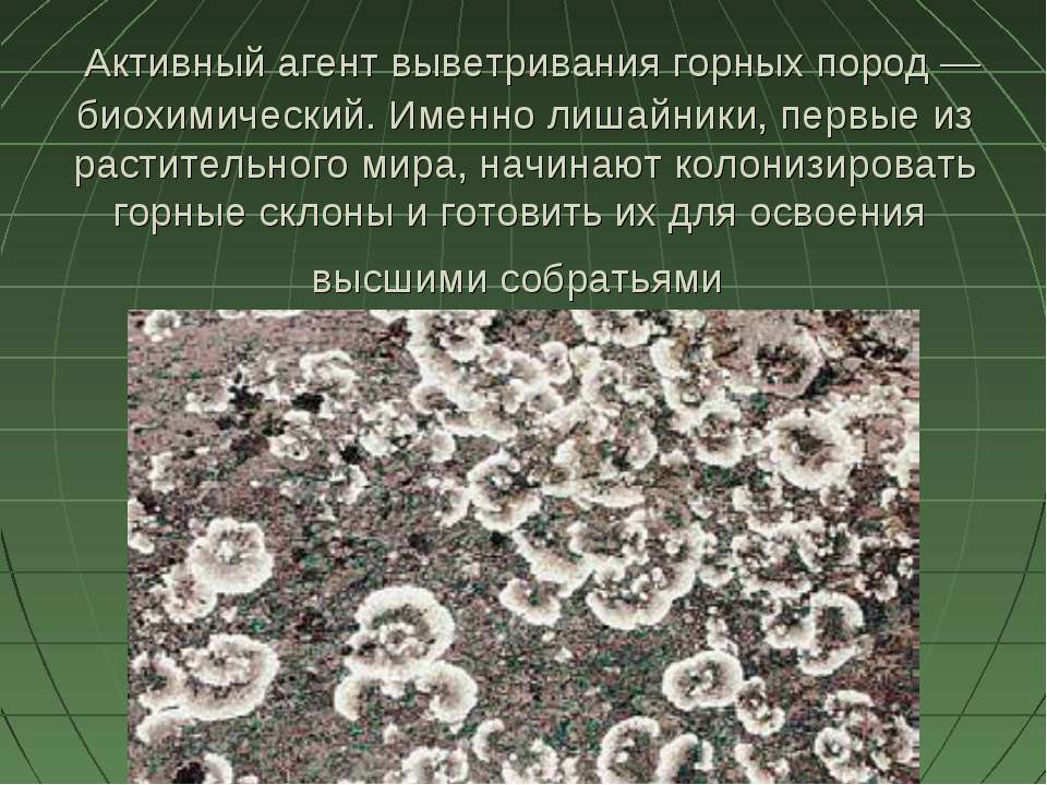 Активный агент выветривания горных пород — биохимический. Именно лишайники, п...