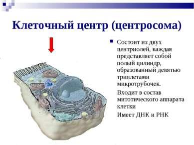 Клеточный центр (центросома) Состоит из двух центриолей, каждая представляет ...
