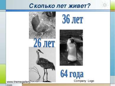 Сколько лет живет?