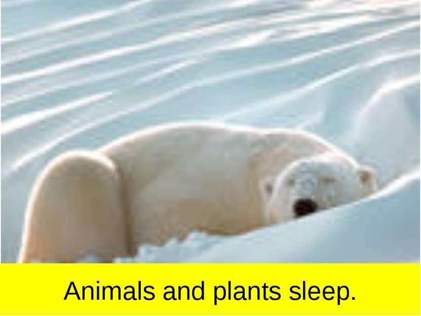 Animals and plants sleep.