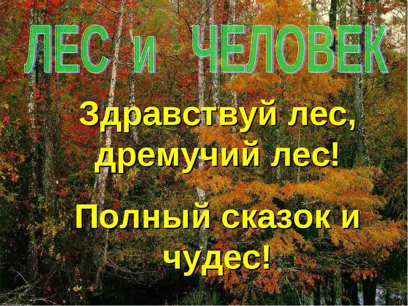 Здравствуй лес, дремучий лес! Полный сказок и чудес!