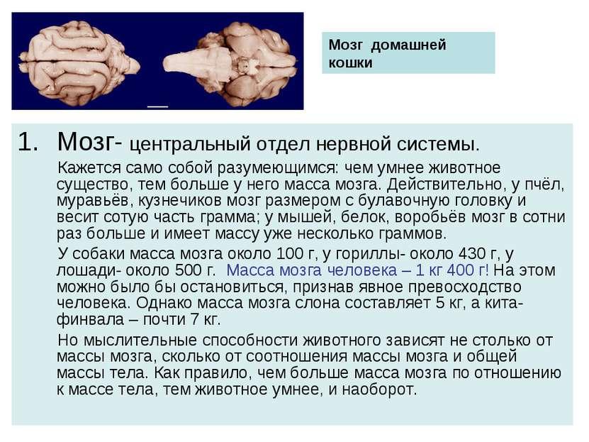 Мозг- центральный отдел нервной системы. Кажется само собой разумеющимся: чем...