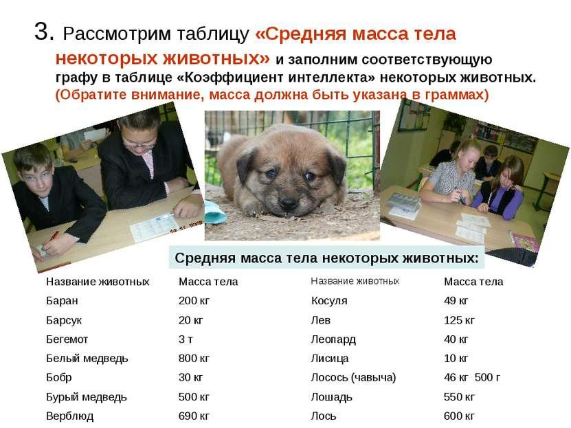 3. Рассмотрим таблицу «Средняя масса тела некоторых животных» и заполним соот...