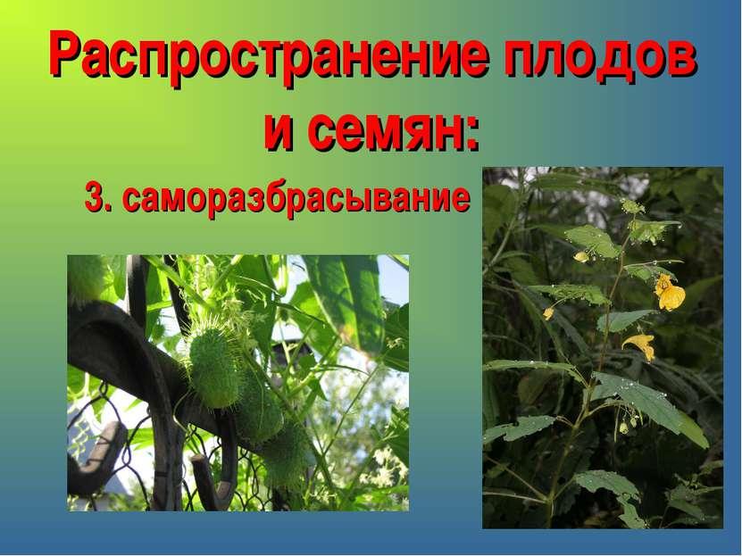 Распространение плодов и семян: 3. саморазбрасывание
