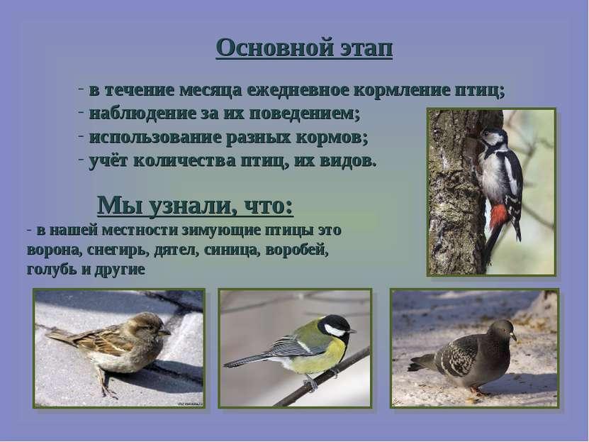 Основной этап в течение месяца ежедневное кормление птиц; наблюдение за их по...