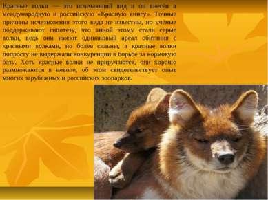 Красные волки — это исчезающий вид и он внесён в международную и российскую «...