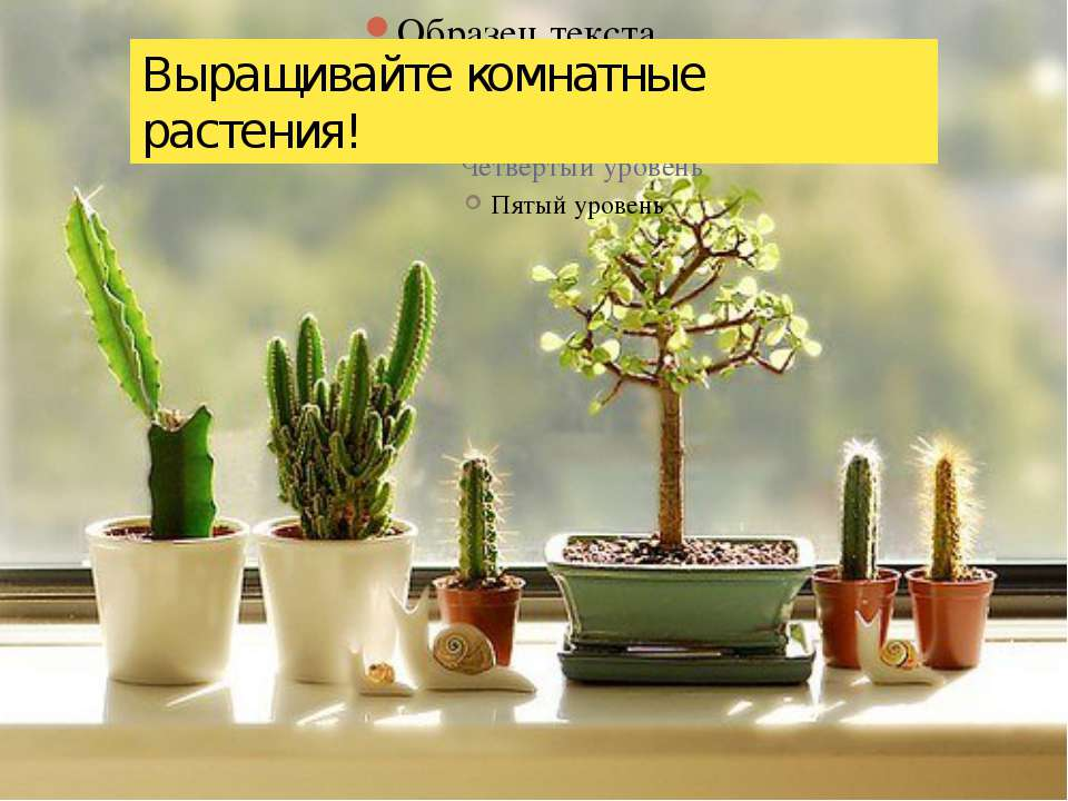 Выращивайте комнатные растения!