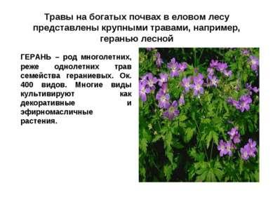 Травы на богатых почвах в еловом лесу представлены крупными травами, например...