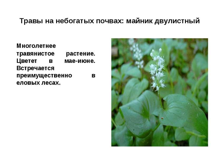 Травы на небогатых почвах: майник двулистный Многолетнее травянистое растение...