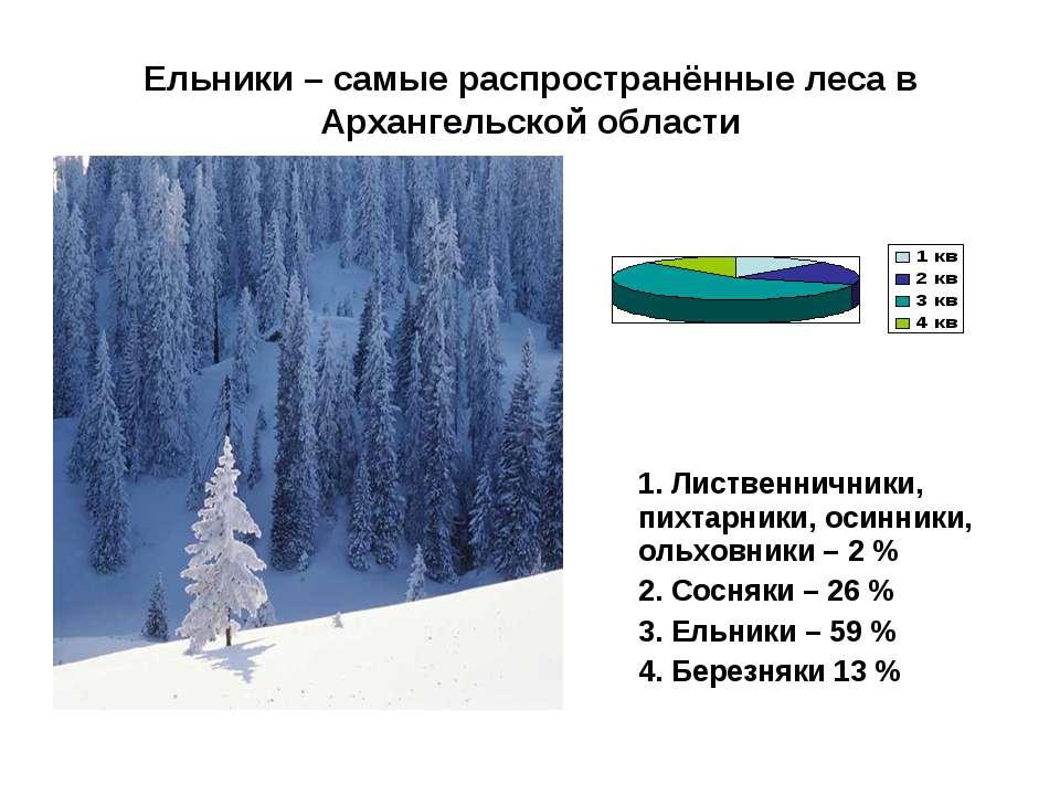 Ельники – самые распространённые леса в Архангельской области 1. Лиственнични...