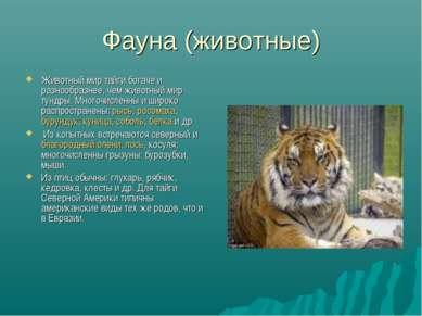 Фауна (животные) Животный мир тайги богаче и разнообразнее, чем животный мир ...