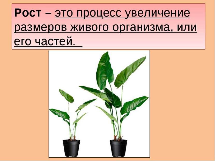 Рост – это процесс увеличение размеров живого организма, или его частей.