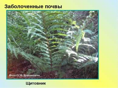 Щитовник Заболоченные почвы