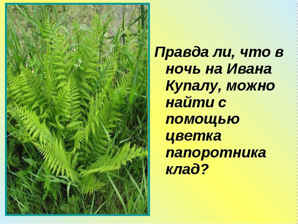 Правда ли, что в ночь на Ивана Купалу, можно найти с помощью цветка папоротни...