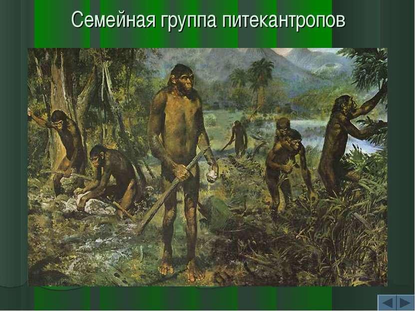 Семейная группа питекантропов