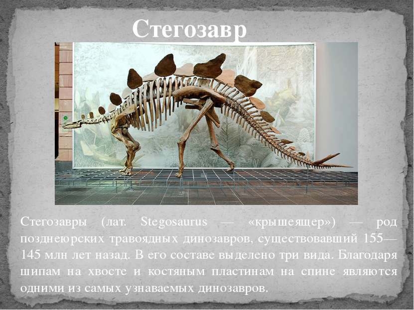 Стегозавры (лат. Stegosaurus — «крышеящер») — род позднеюрских травоядных дин...