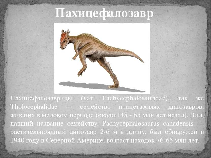 Пахицефалозавриды (лат. Pachycephalosauridae), так же Tholocephalidae — семей...