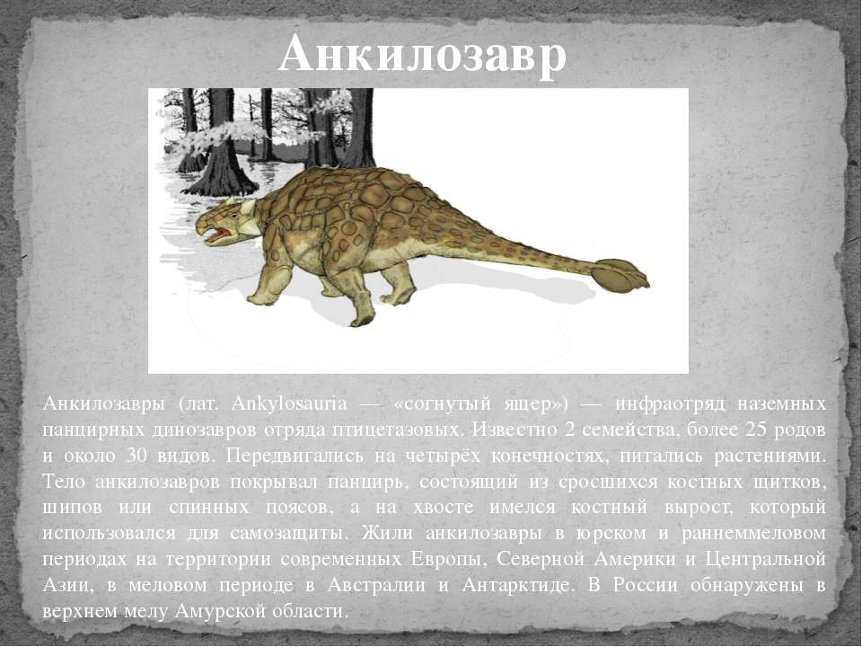 Анкилозавры (лат. Ankylosauria — «согнутый ящер») — инфраотряд наземных панци...