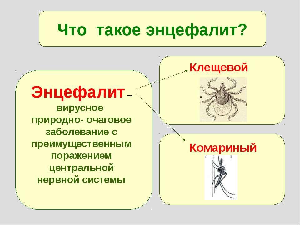 Что такое энцефалит? Энцефалит – вирусное природно- очаговое заболевание с пр...