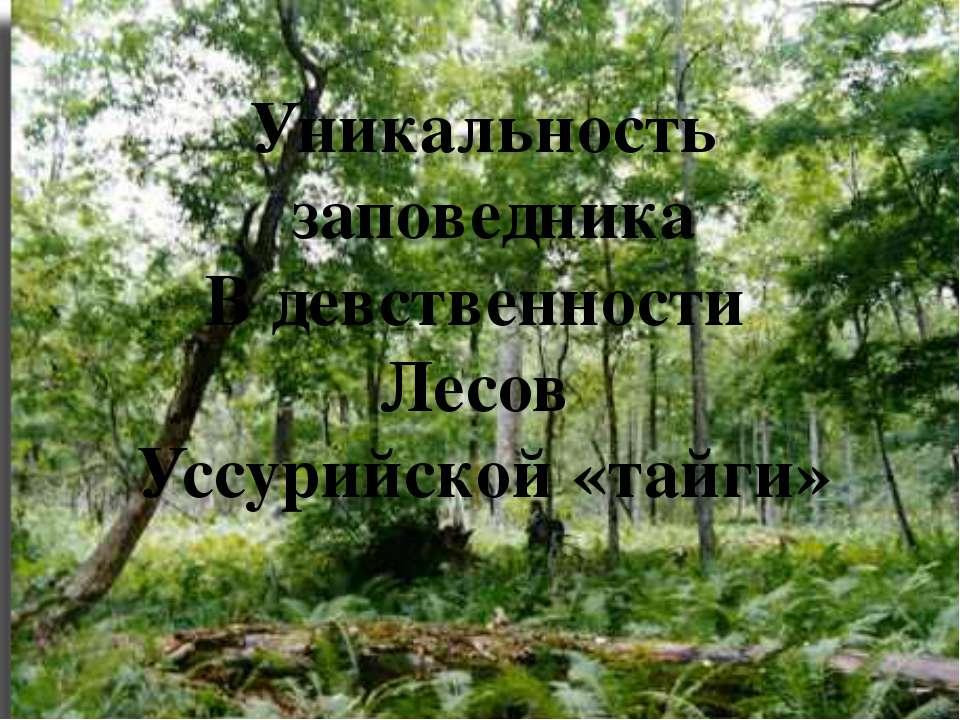 Уникальность заповедника В девственности Лесов Уссурийской «тайги»