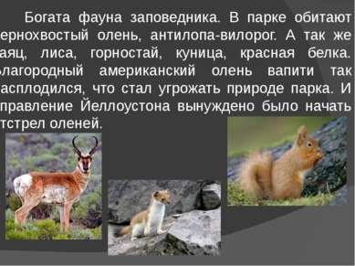 Богата фауна заповедника. В парке обитают чернохвостый олень, антилопа-вилоро...