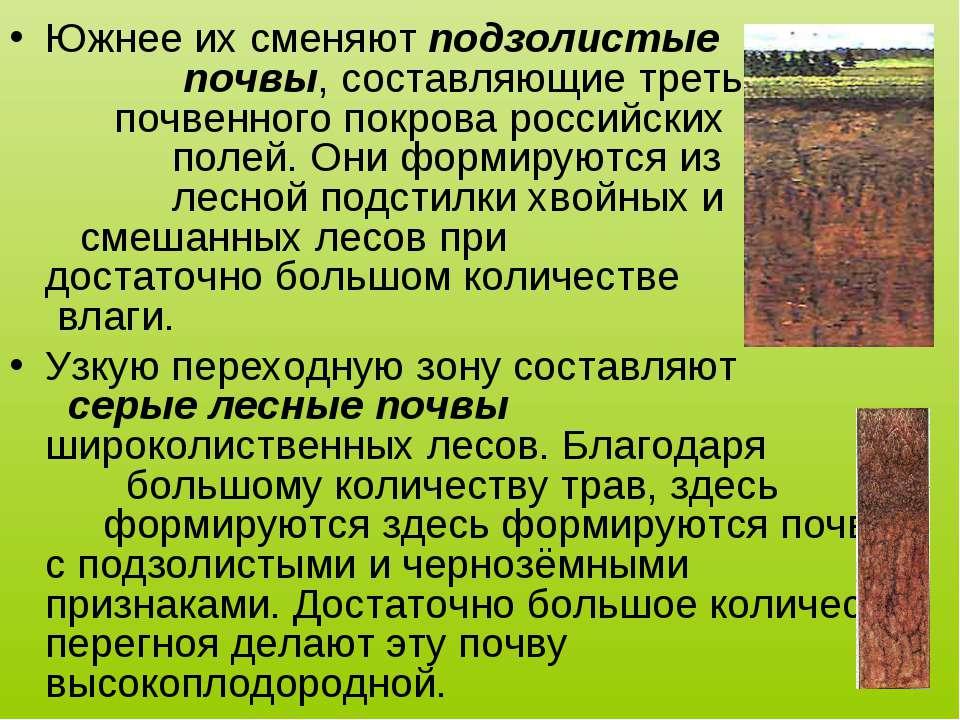 Южнее их сменяют подзолистые почвы, составляющие треть почвенного покрова рос...