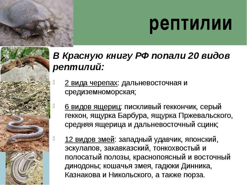 рептилии В Красную книгу РФ попали 20 видов рептилий: 2 вида черепах: дальнев...