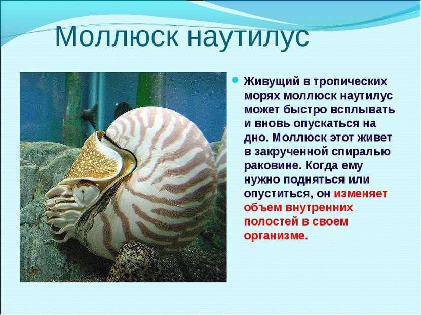 Моллюск наутилус Живущий в тропических морях моллюск наутилус может быстро вс...